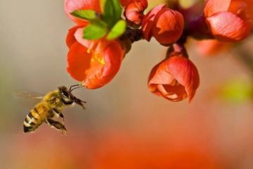 11 tác dụng của phấn hoa với sức khỏe
