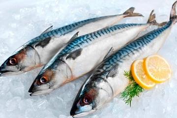 Bí quyết chọn cá thu tươi ngon cực chuẩn bằng mắt thường