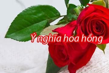 Quà tặng cuộc sống, ý nghĩa hoa hồng cùng câu chuyện công chúa hoa hồng